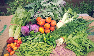 Harvest of Vegetables from Spring Creek Farm